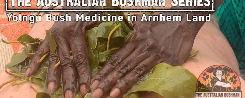 Yolngu Bush Medicine in Arnhem Land