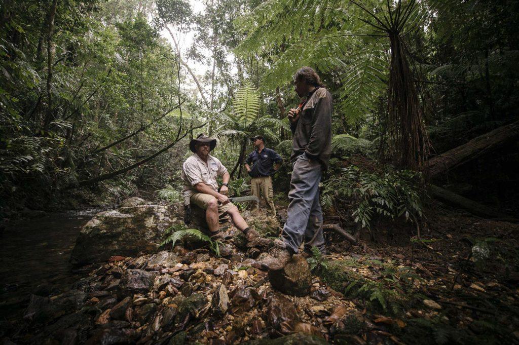 Sunshine Coast Tag a long tour rainforest walk